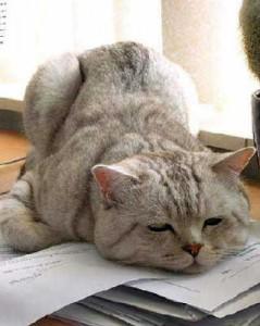 chat fatigué