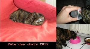 fete des chats 2012