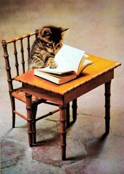 Chat à sa table de lecture